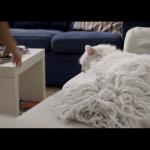 CooperVision-Cat_still_03