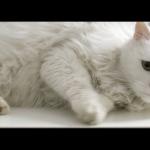 CooperVision-Cat_still_04