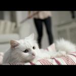 CooperVision-Cat_still_06